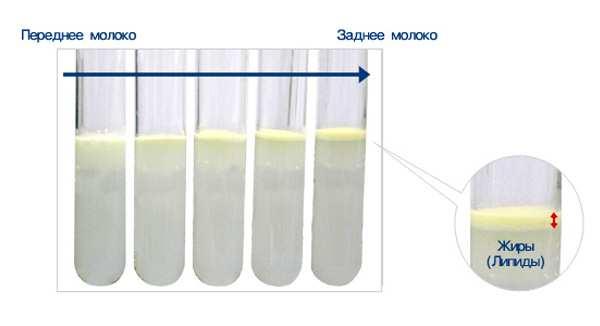 Как проверить качество молока в домашних условиях 12