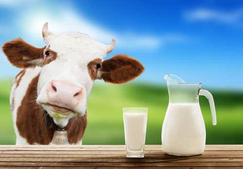 к чему снится молоко препотентного вислоухого