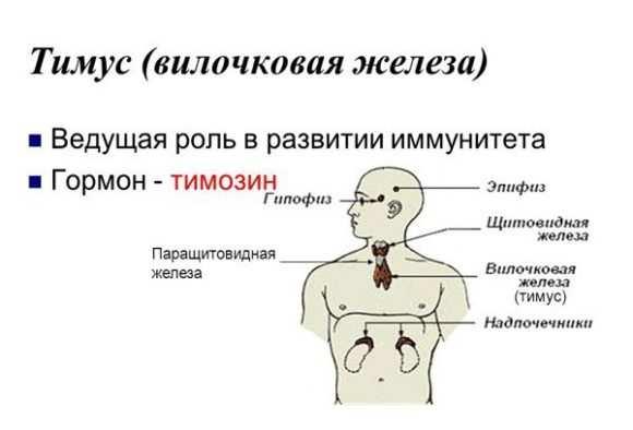 vilochkovaya