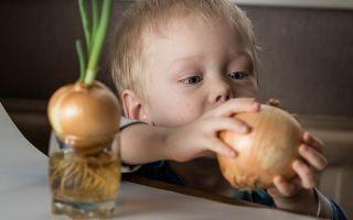 Когда вводить лук в прикорм ребенку на грудном вскармливании и на смесях, с какого возраста