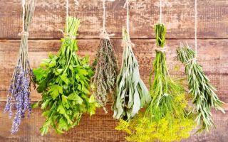 Как воздействуют травы на прекращение лактации и рецепты применения