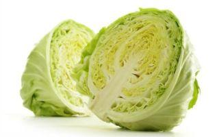 Когда и как вводить белокочанную капусту, как прикорм для грудничка, советы