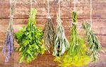 Какие травы полезны при грудном вскармливании и их применение