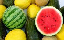 Польза и вред арбуза при ГВ, можно ли употреблять и противопоказания, как выбрать ягоду