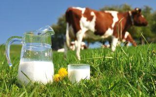 Можно ли давать коровье молоко грудничку вместо смеси, что лучше