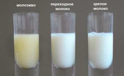 какого цвета молоко