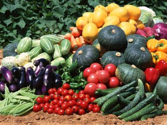 овощи со своего огорода
