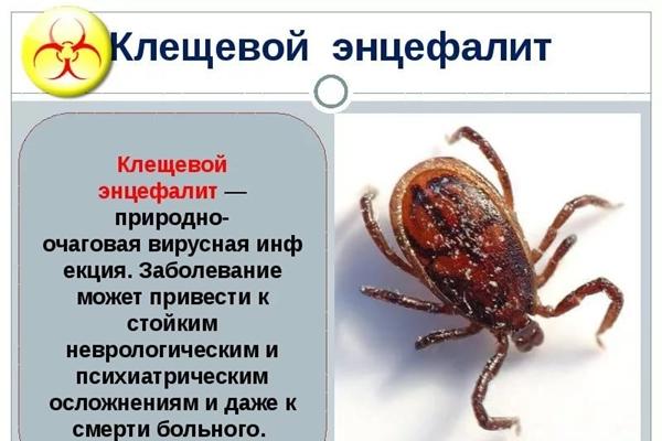 информация про клещевого энцефалита