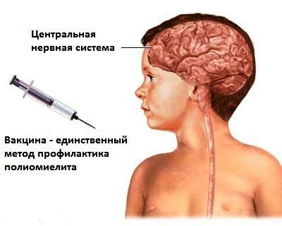 схема прививки от полиомиелита