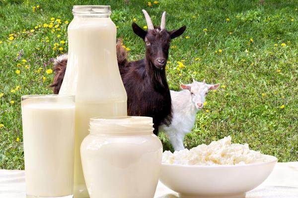 козьи молочные продукты