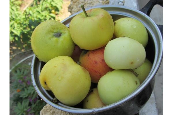 помытые зеленые яблоки