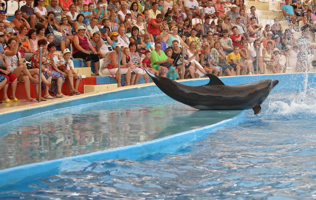 дельфинарий в анапа