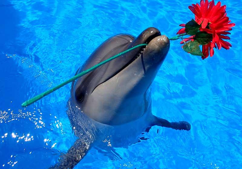 Дельфинарий «Театр морских животных Акватория»