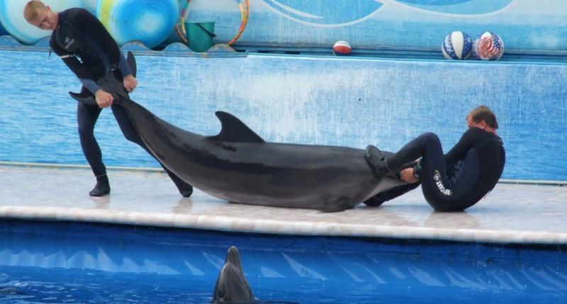 Дельфинарий «Страна Дельфиния»