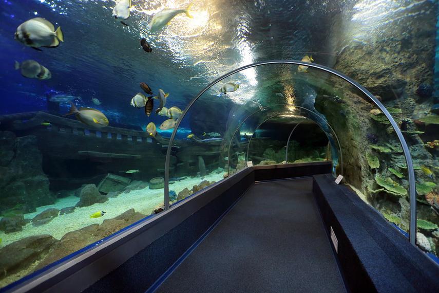 Океанариум «Sochi Discovery World Aquarium»