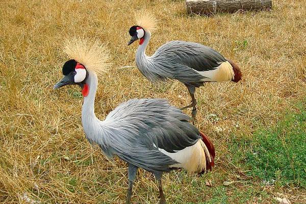 «Воробьи» — парк птиц