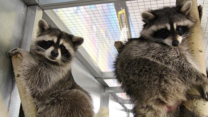 Зоологический парк для самых маленьких