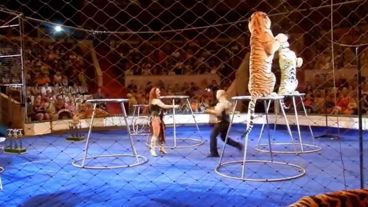 Цирк в уфе