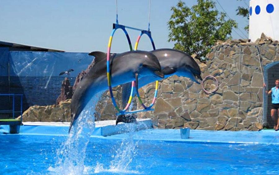 ейске Дельфинарий