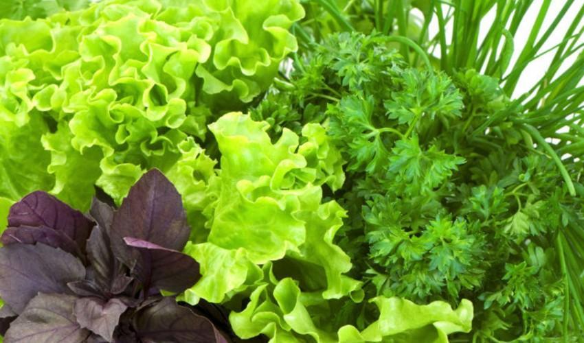 Зелень разная