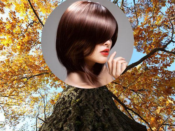 цвета волос кора дуба